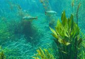 Aquatic Plants And Fish