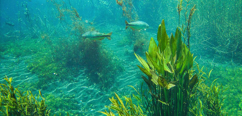 Aquatic Plants And Fish