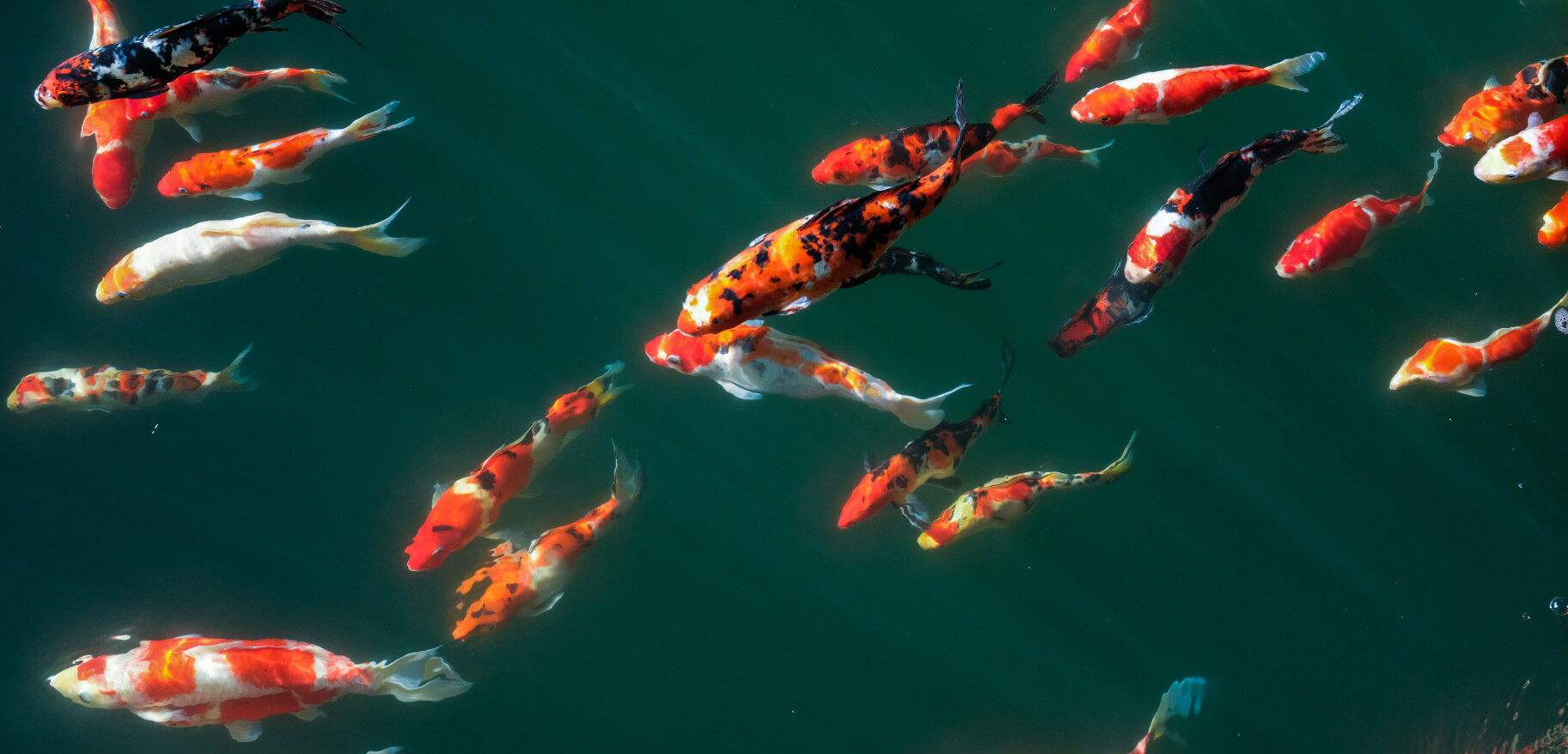 Quality Supplies For Ponds Lakes Water Features Everything Koi